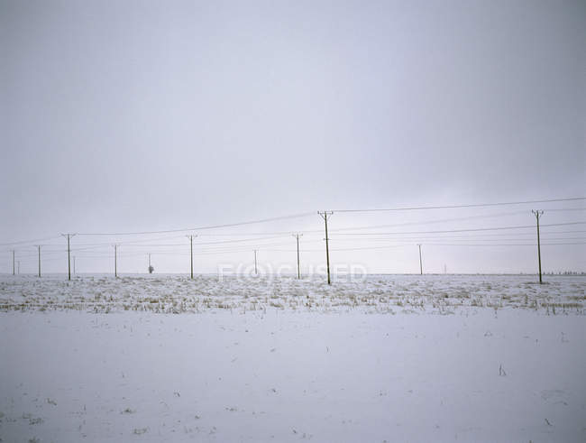 Telephone poles and electricity cables in snowy field — Stock Photo