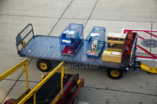 Two dogs in cages next at luggage cart at airport — Stock Photo
