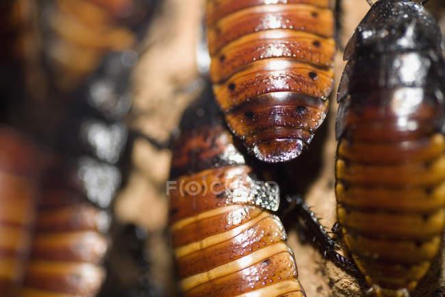Captura de fotograma completo de insectos cucarachas - foto de stock