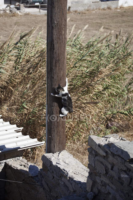 Cat clinging to telegraph pole at countryside — Stock Photo