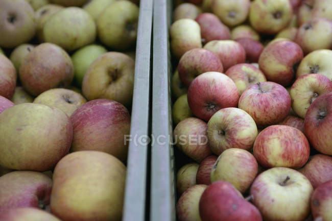 Close up view of crates of apples — Stock Photo
