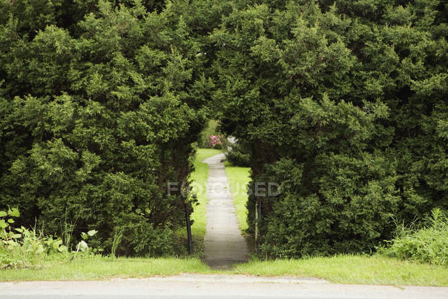 Pathway through arch in hedge at park — Stock Photo
