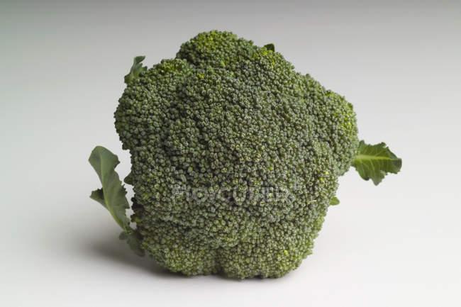 Broccoli freschi su sfondo bianco — Foto stock