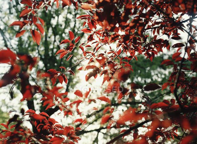 Ve a través de ramas de árbol con follaje de otoño - foto de stock