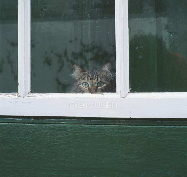 Gato tigrado, olhando pela janela rural — Fotografia de Stock