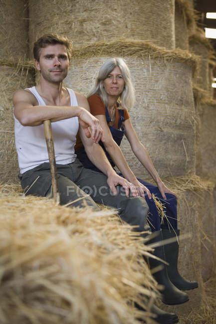 Двое рабочих сидят на тюке сена в сарае и смотрят в камеру — стоковое фото