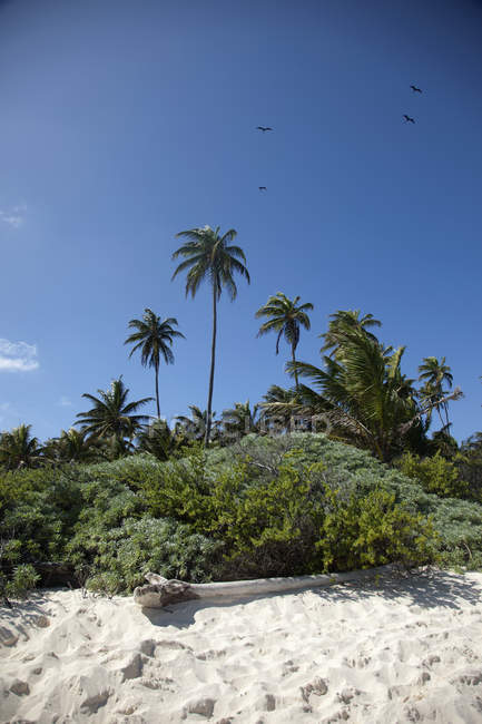 Palmen und üppiger Vegetation an einem Strand in — Stockfoto