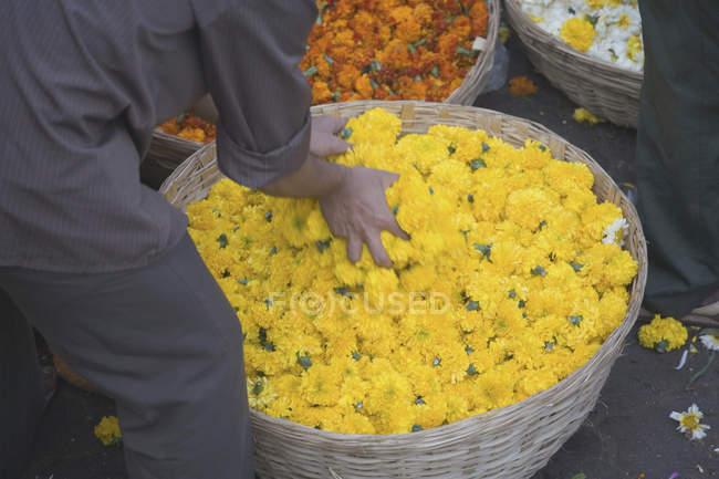 Обтинання людина нахиляючись корзини квітів на ринку — стокове фото
