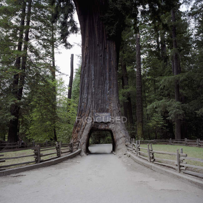 Chandelier tree with archway on country road — Stock Photo