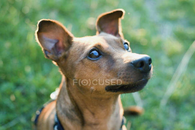 Portrait of cute rural dog at grassy lawn — Stock Photo