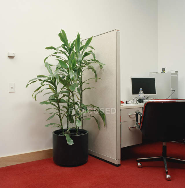 Potted plant next to office cubicle — Stock Photo
