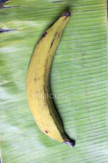 Vue de dessus du bananier couché sur la feuille de bananier — Photo de stock