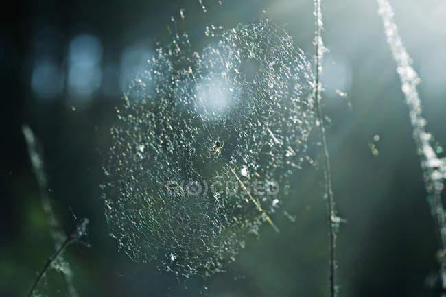 Petite araignée en web nature — Photo de stock