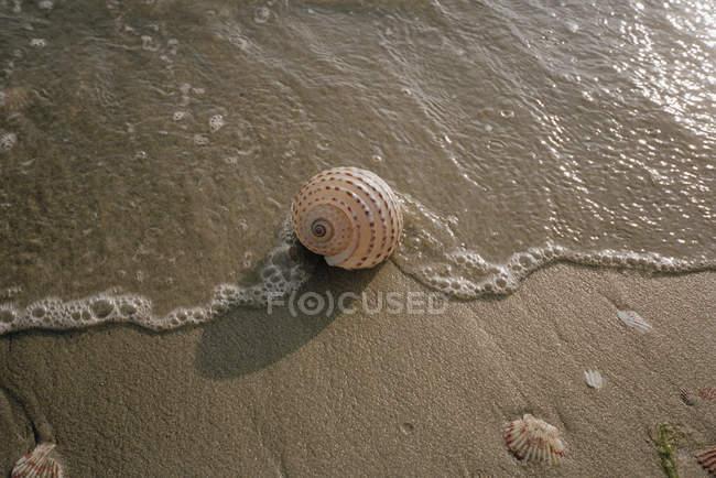 Coquille sur la plage dans les vagues de mer peu profondes — Photo de stock