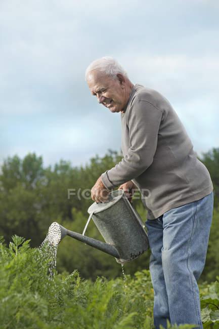 Uomo maggiore innaffiare le piante in giardino — Foto stock