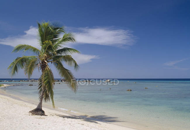 Scenic view of palm tree on idyllic beach — Stock Photo