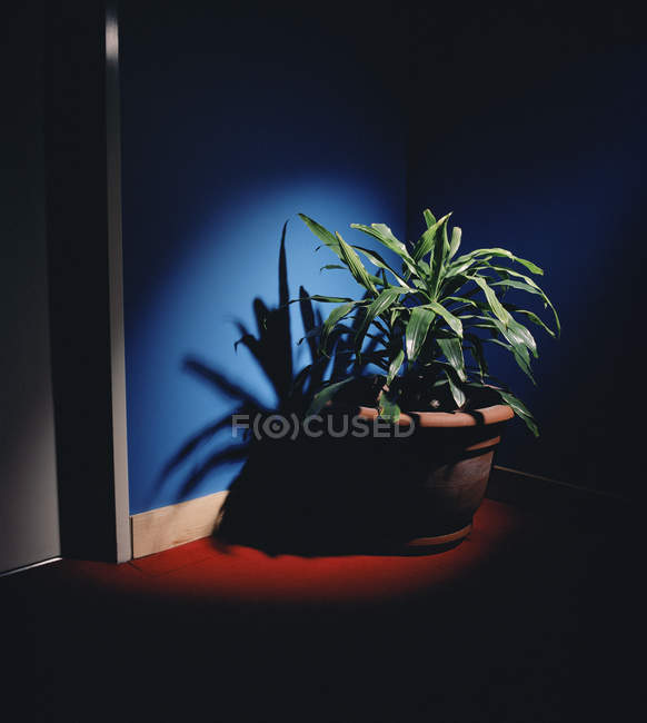 Potted plant in corner under spot light — Stock Photo