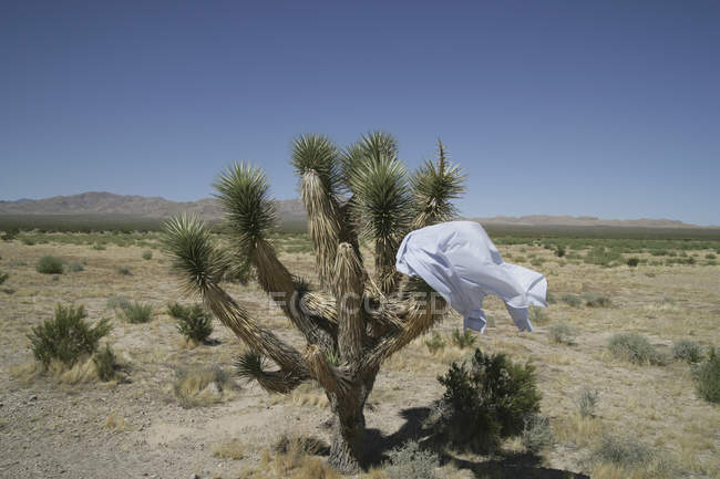 Business shirt stuck on cactus in desert landscape — Stock Photo