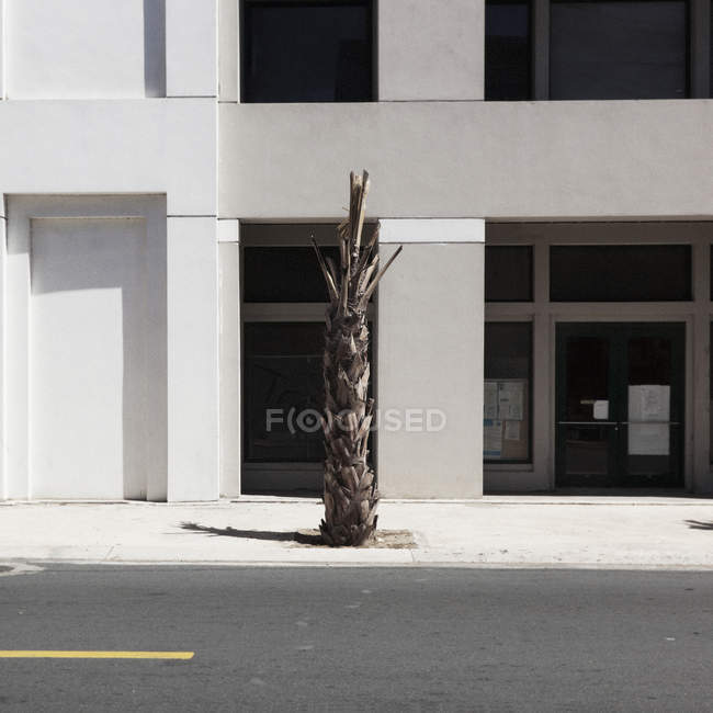 Sunlight shining on a dead palm tree in front of a building — Stock Photo