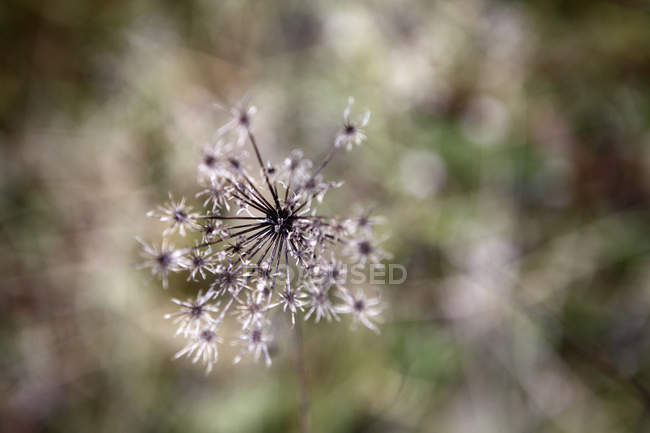 Diretamente acima da vista de planta crescer ao ar livre — Fotografia de Stock