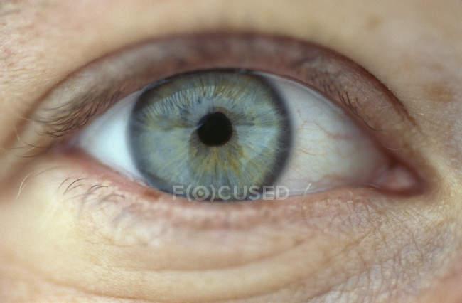 Close up shot of grey human eye — Stock Photo