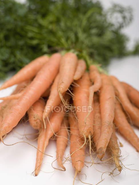Vista de cerca del ramo de zanahorias sobre fondo blanco - foto de stock