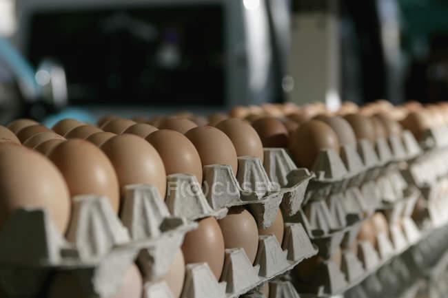 Vue rapprochée des piles d'œufs dans les boîtes d'œufs — Photo de stock