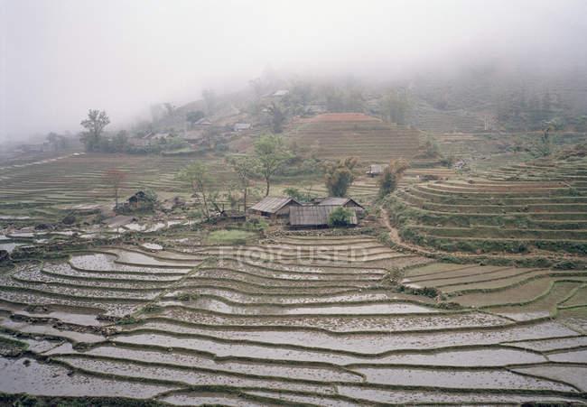Paisagem de arrozais nebulosos — Fotografia de Stock