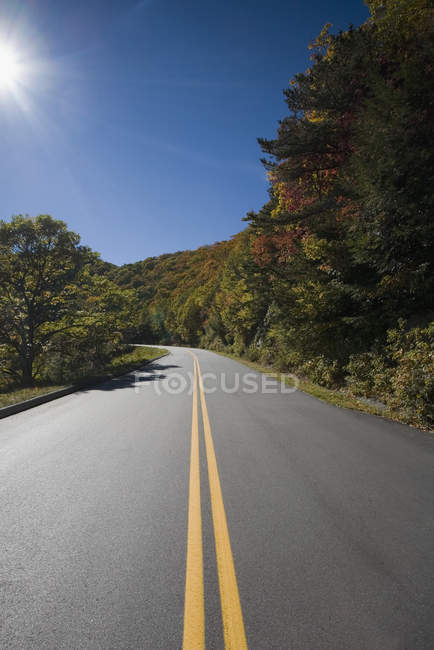 Idyllic view to tree lined road — Stock Photo