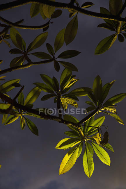 Illuminated leaves and branches at dusk — Stock Photo