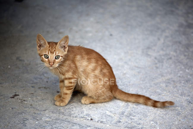 Ginger kitten on pavement anxiously looking at camera — Stock Photo