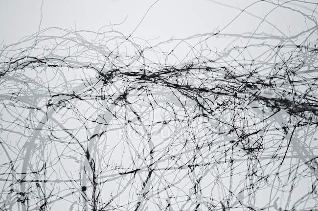 Double exposure of barbed wire against sky — Stock Photo