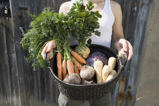 Mid section of man holding freshly picked vegetables in basket — Stock Photo