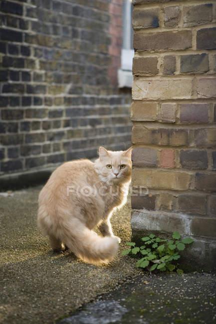 Cat standing on pathway between buildings — Stock Photo