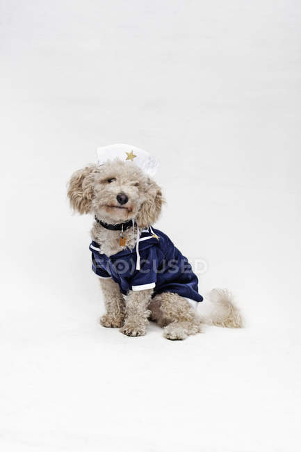 Mixed breed dog wearing sailor suit and sailor hat — Stock Photo