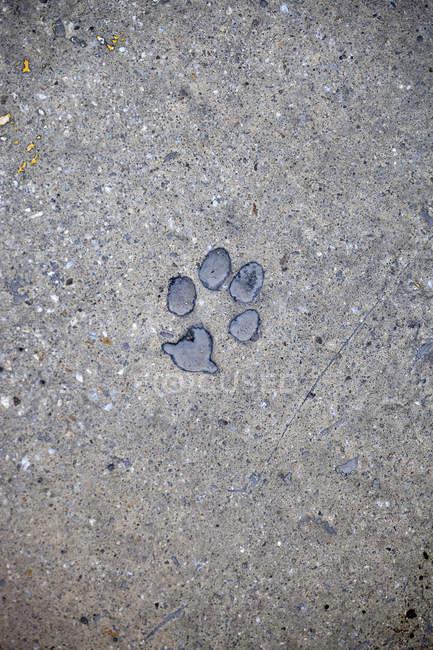 Stampa zampa gatto in calcestruzzo — Foto stock