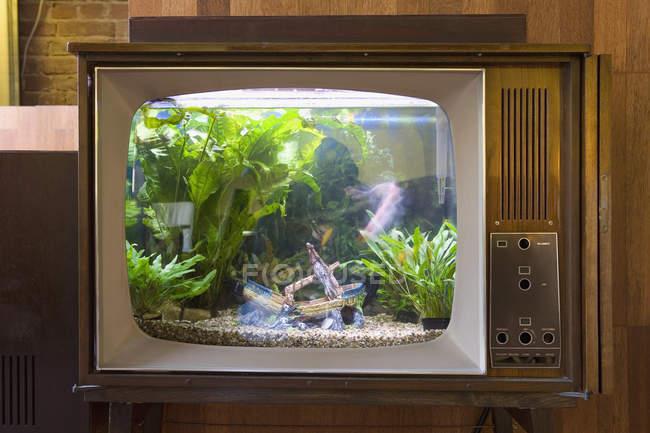 Aquarium dans le corps de la télévision vintage — Photo de stock