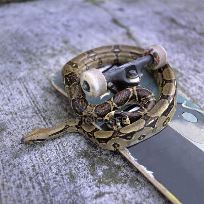 Крупным планом вид змеи на скейтборде — стоковое фото