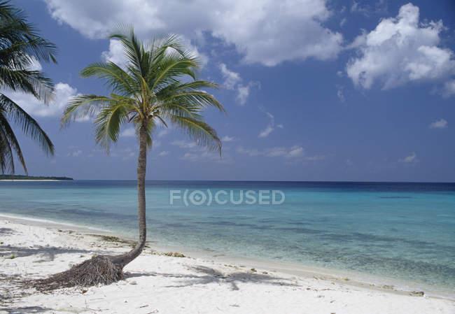 Идиллический вид Пальмы на пляже — стоковое фото