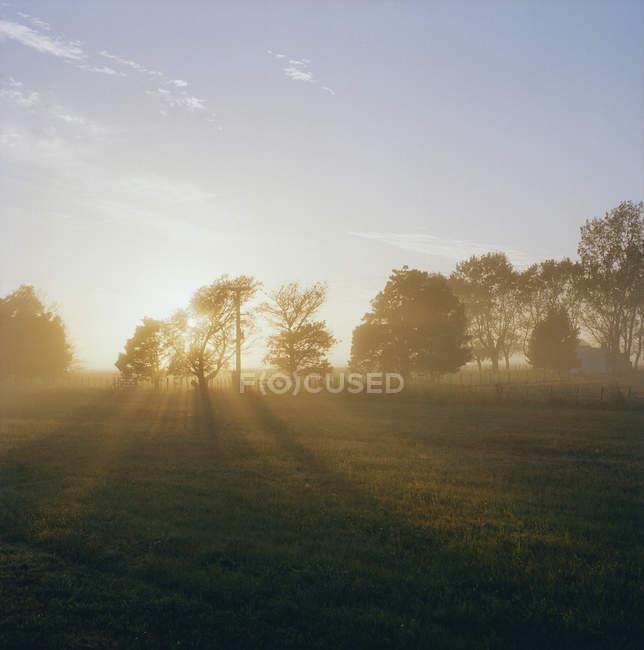Idyllic sunset over countryside summer field — Stock Photo