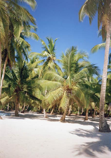 Idílico bosque tropical cerca de la playa en día soleado - foto de stock