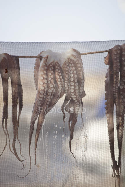 Octopuses drying under net at summer outdoor — Stock Photo