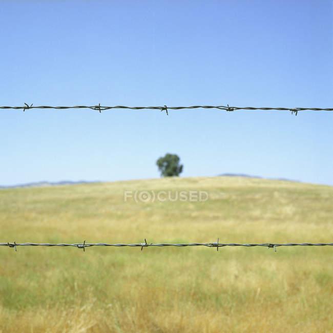 Колючая проволока перед полем под голубым небом — стоковое фото