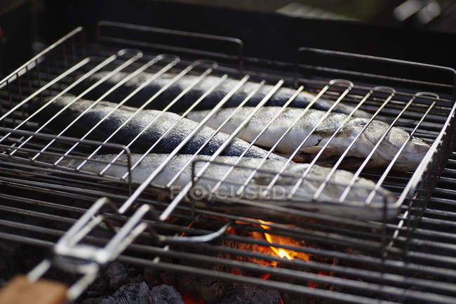 Close up view of fish on a barbeque grill — Stock Photo