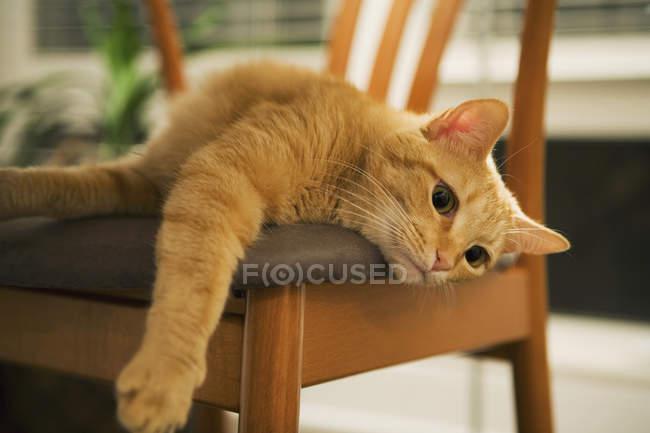 Gato ruivo deitado na cadeira e outstretching pata — Fotografia de Stock