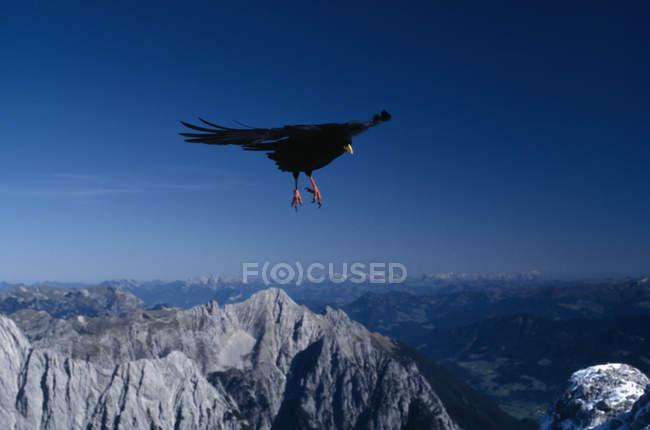 Мальовничі постріл птах летить над горами — стокове фото