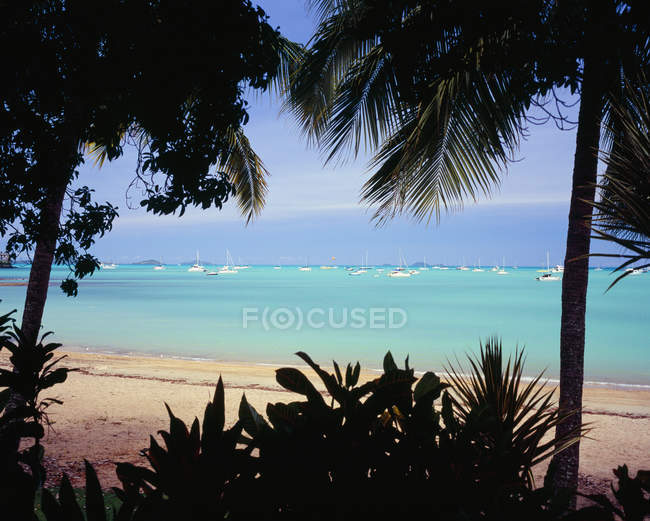 Moored yachts at tropical sand shore seen through palm trees — Stock Photo