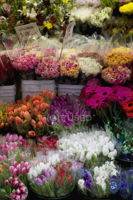 Full frame shot of flower stall at market — Stock Photo