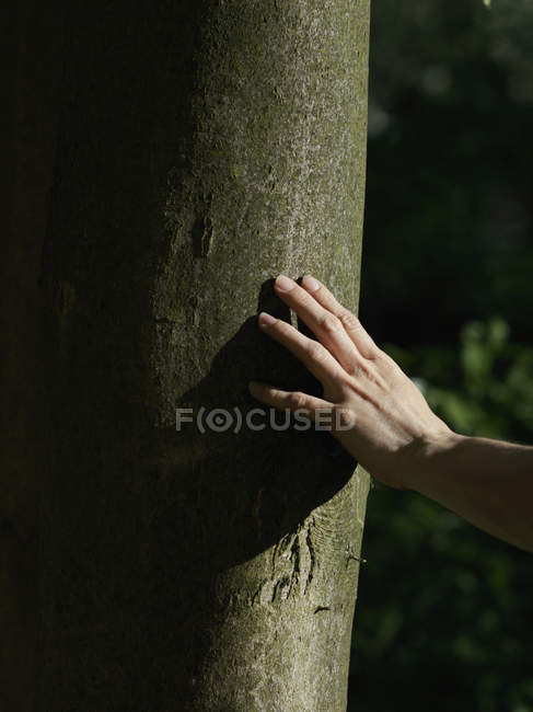Une main humaine touchant un tronc d'arbre — Photo de stock