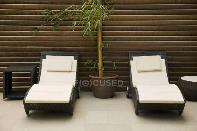 Potted bamboo amid two lounge chairs — Stock Photo